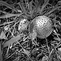 Shiny Mushroom by Tara Potts