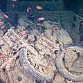 Motorbikes On A Ship Wreck by Roy Pedersen