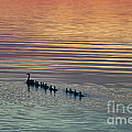 Shipshewana Lake Evening by David Arment
