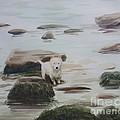 Shirley's Dog by Martin Howard