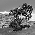 Shoe Tree by Tarey Potter