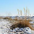Shore And Ice by Linda Kerkau