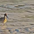 Shore Bird 7 12/5 by Mark Lemmon