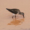 Shore Bird At Whitewater Draw by Tom Janca