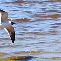 Shore Bird by Robert Floyd