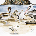 Shore Birds by Joette Snyder