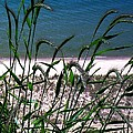 Shore Grass View by Desiree Paquette