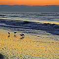 Shorebirds At Dawn by Eric Albright