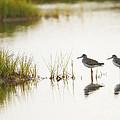 Shorebirds At Dusk by John Vose