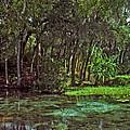 Shoreline. Rainbow Springs. by Chris  Kusik