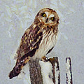 Short-eared Owl   by Mark Kiver