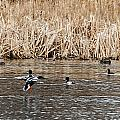 Shoveler Landing by Edward Peterson