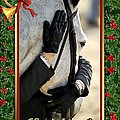 Show Horse English Blank Christmas Card by Olde Time  Mercantile