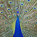 Showing Off by Shoal Hollingsworth