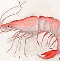 Shrimp by Bev Veals