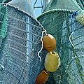 Shrimp Net Close Up by Sandi OReilly
