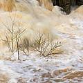 Shrubs In The Rapids #2 by Stuart Litoff