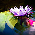 Shubunkin Goldfish With Waterlily by Priya Ghose