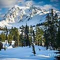 Shuksan Winter Paradise by Inge Johnsson