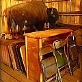 Shy Buffalo by John Malone