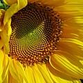 Shy Sunflower by Laura Corebello