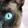 Siamese Cat Art - Half The Story by Sharon Cummings