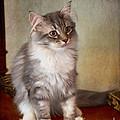 Siberian Forest Kitten II by Louise Heusinkveld