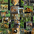 Siberian Tiger Collage by Thomas Woolworth