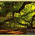 Side Limbs Of The 1400 Year Old Angel Oak by Susanne Van Hulst