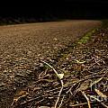 Side Of The Road by Jolanta Meskauskiene
