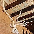 Side Skull  by Jen  Brooks Art
