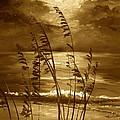 Sienna Moonlight by Alan Lakin