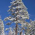Sierra Snow by Doug Holck