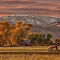 Sierra Sunrise by Armando Picciotto