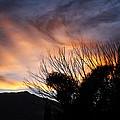 Sierra Sunset by Newman Artography