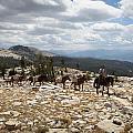 Sierra Trail by Diane Bohna