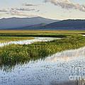 Sierra Valley Wetlands by Dianne Phelps
