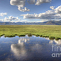 Sierra Valley Wetlands II by Dianne Phelps
