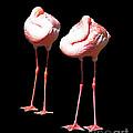 Siesta In Pink by Lizi Beard-Ward