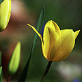 Signs Of Spring II by Douglas Stucky