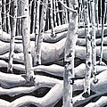 Silent Aspens by Reveille Kennedy