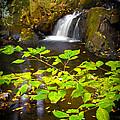 Silent Brook by Mark Robert Rogers