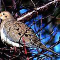 Silent Dove Sm  by Lesa Fine
