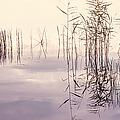 Silent Rhapsody. Sacred Music by Jenny Rainbow