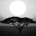 Silhouette Of A Tree At Sunrise by Panoramic Images