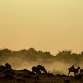 Silhouette Of Lechwe, Kobus Leche by Beverly Joubert