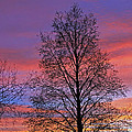 Silhouette Of Tree by Tony Murtagh
