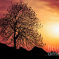 Silhouette Of Tree by Yew Kwang