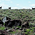 Silhouette Of Twin Peaks Wild Horses Ne California by Craig Downer