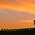 Silhouette Of Vineyard At Sunset, Paso by Panoramic Images
